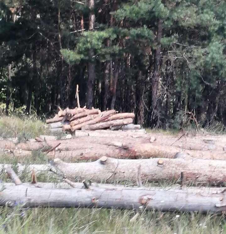 веприк ліс