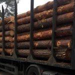 На Полтавщині викрито посадовців, які сприяли незаконній вирубці лісу